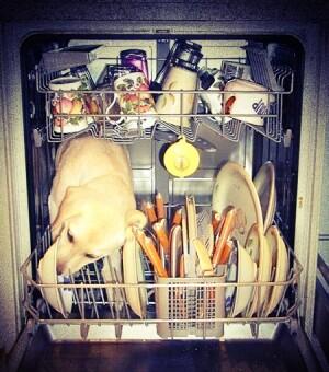 Entretenir, dépanner et réparer son lave-vaisselle